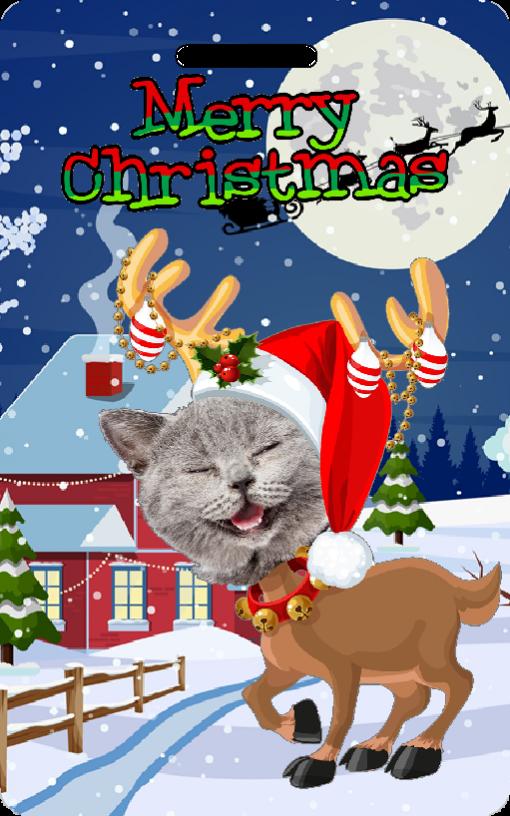 novelty reindeer cat xmas card