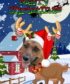 novelty reindeer xmas card